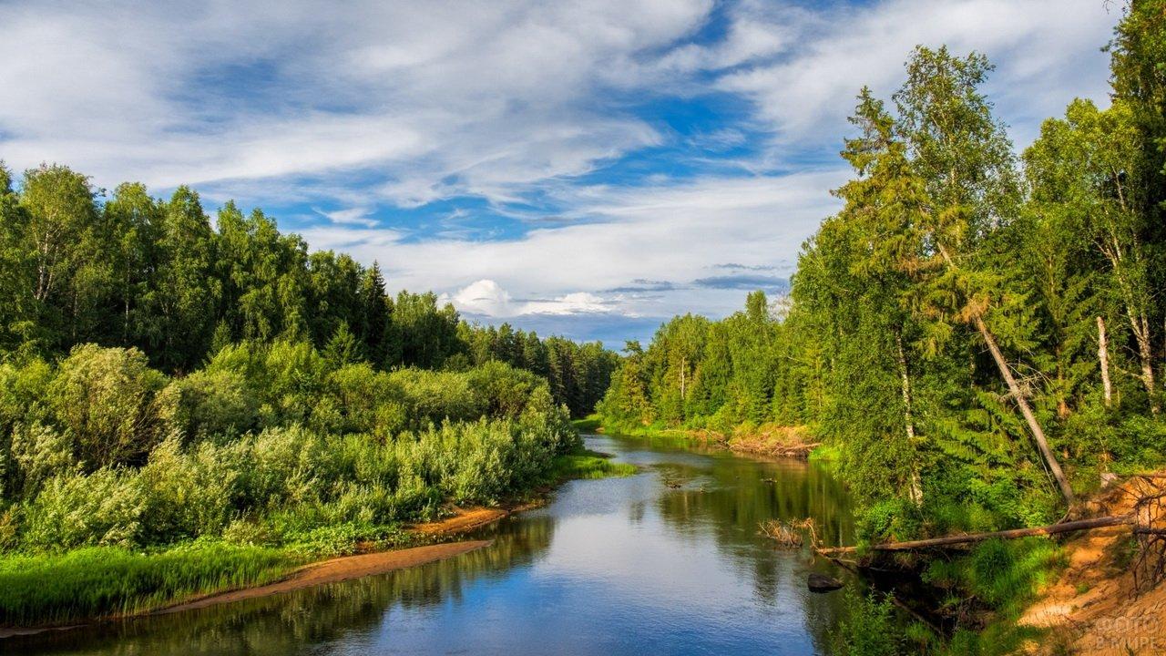 Падающие деревья в таёжной реке