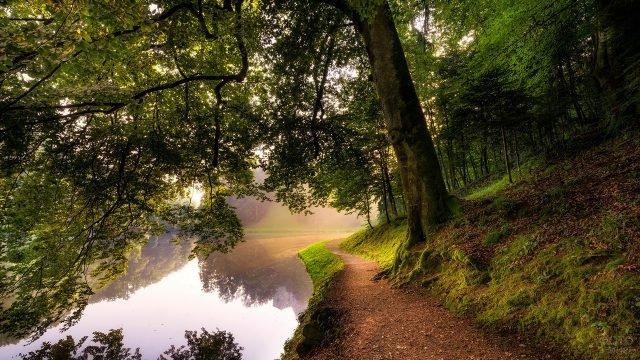 Тропинка под деревом вдоль реки