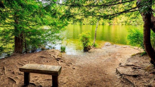 Скамейка под елью на берегу реки