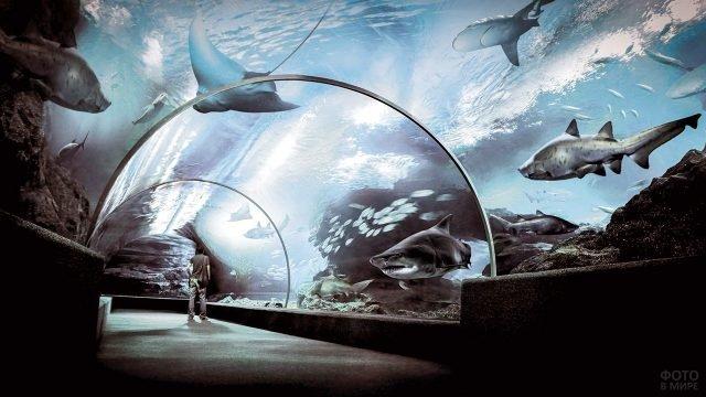 Фантастический подводный мир в океанариуме Бангкока
