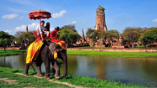 Прогулка на слонах по старому городу