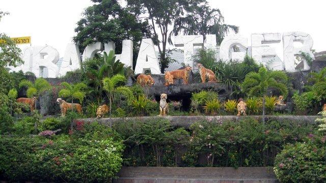Тигровый зоопарк Сирача в Паттайе