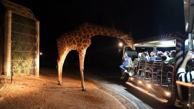 Туристы и жираф на ночном сафари в национальном парке Чианг Май