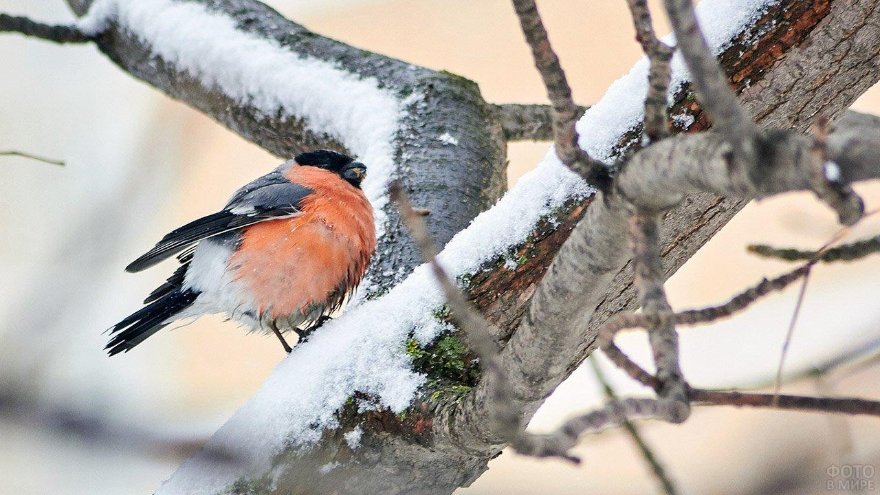 Архангельск с высоты птичьего полета фото характеристика