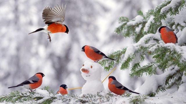 Стайка снегирей на еловой ветке со снеговичком