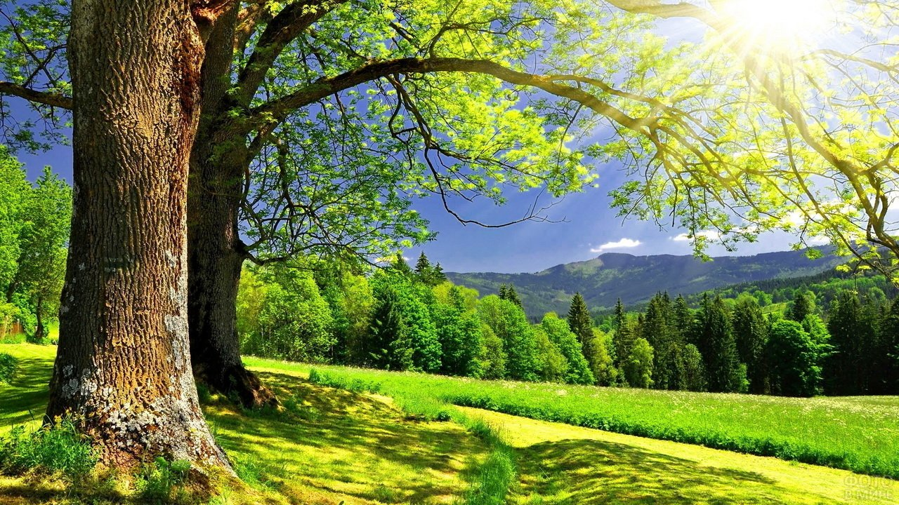 Большие деревья на поляне, лес и горы вдалеке