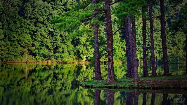 Деревья на берегу лесного озера