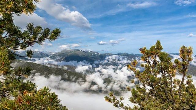 Горный пейзаж с кедрами на фоне облаков над Алтаем