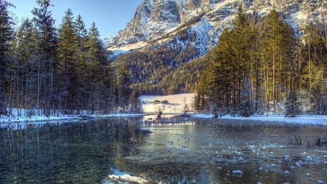 Хвойный лес на берегах зимнего озера в Германии