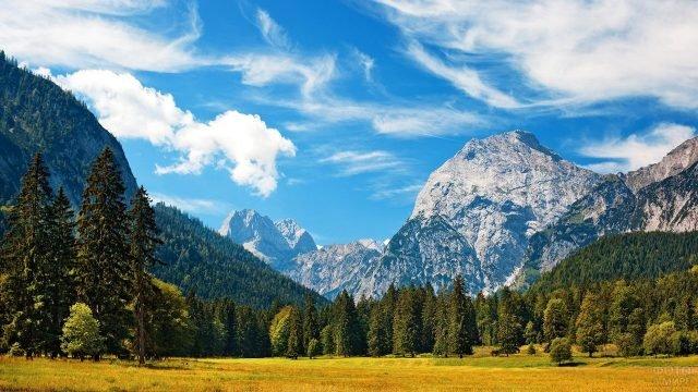 Хвойный лес в швейцарских Альпах