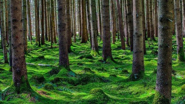 Изумрудный ковёр из мха в лесу