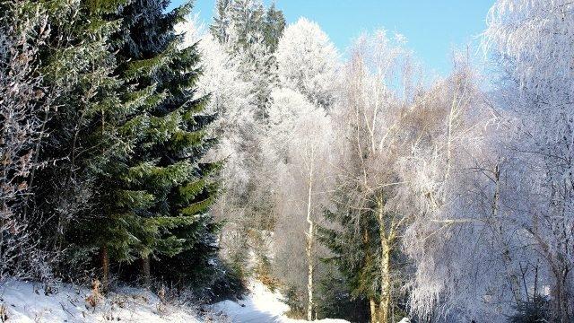 Контрасный лесной пейзаж снежной зимой