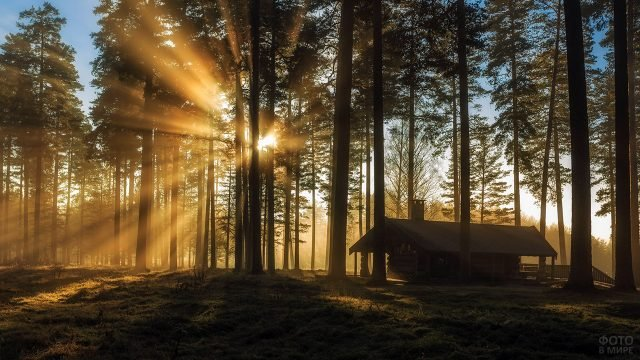 Лесная избушка на фоне солнца, пробивающегося сквозь сосновый бор