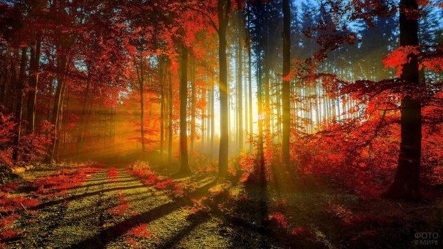 Лучи закатного солнца пробиваются сквозь осеннюю листву