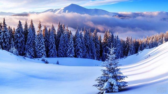 Маленькая ёлочка на фоне сугробов в зимнем лесу в горах