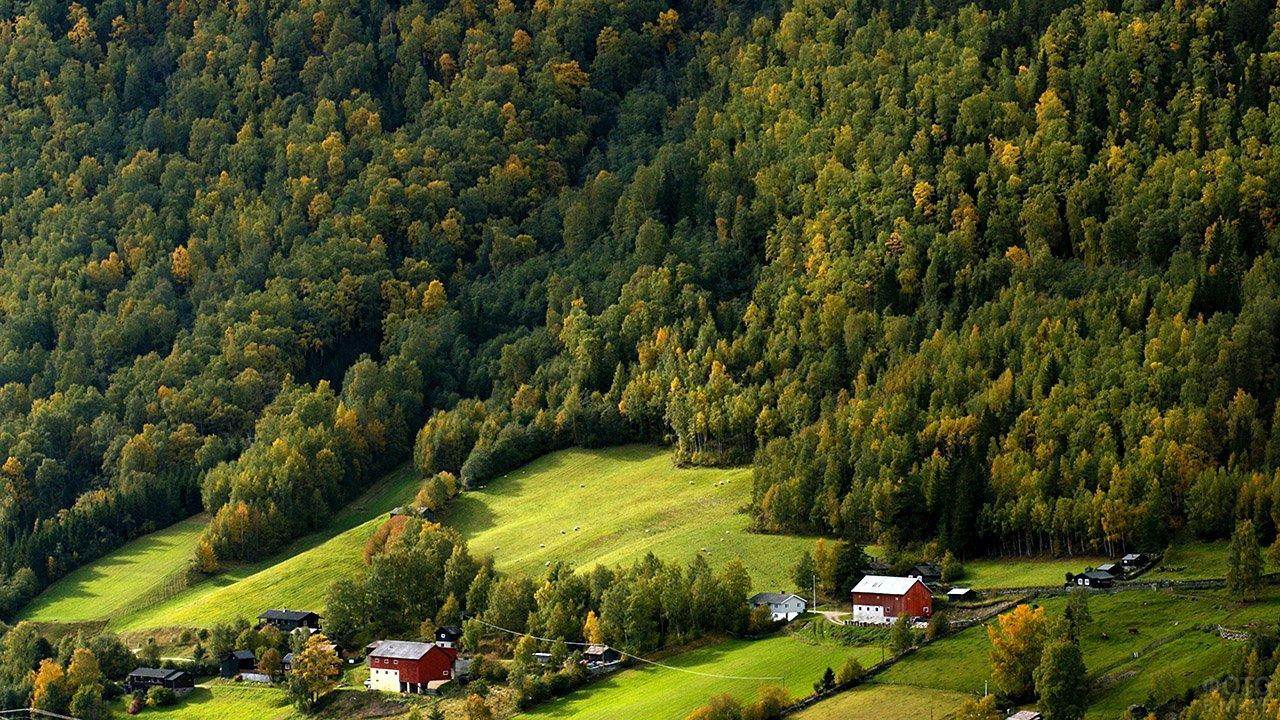 Норвежские фермы у опушки хвойного леса
