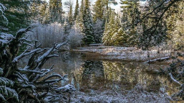 Озеро в еловом лесу в начале зимы
