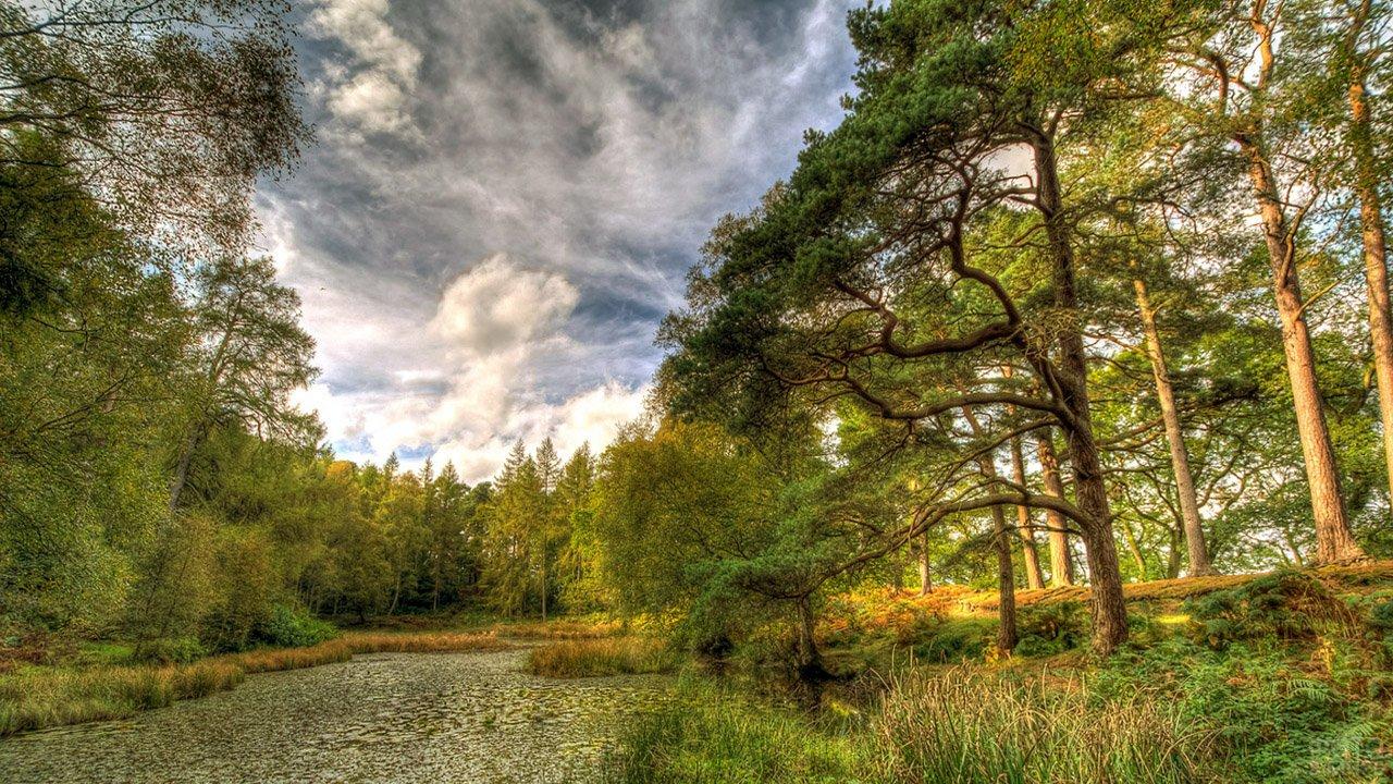 Речка в лесу под соснами