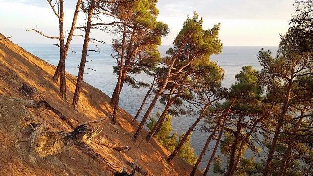Сосны на склоне горы у черноморского побережья