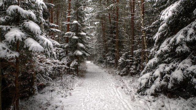 Тропинка сквозь сказочный зимний лес