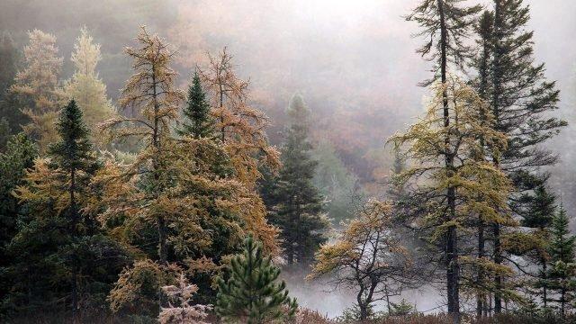 Туман среди верхушек осеннего леса