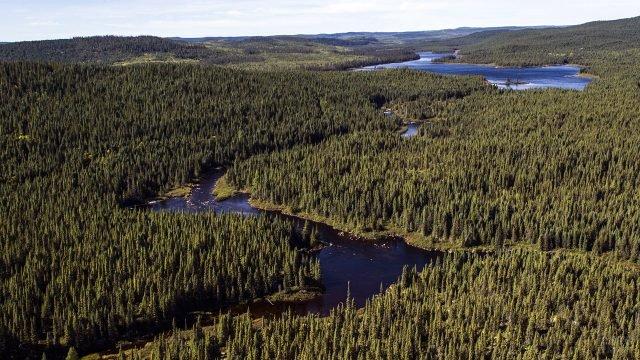 Вид с высоты птичьего полёта на канадскую тайгу