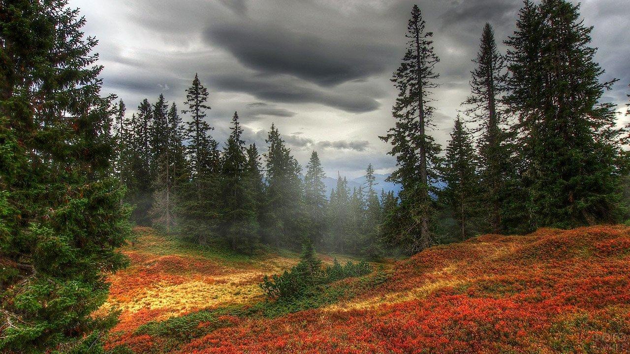 Живописный осенний ковёр в вечнозелёном лесу