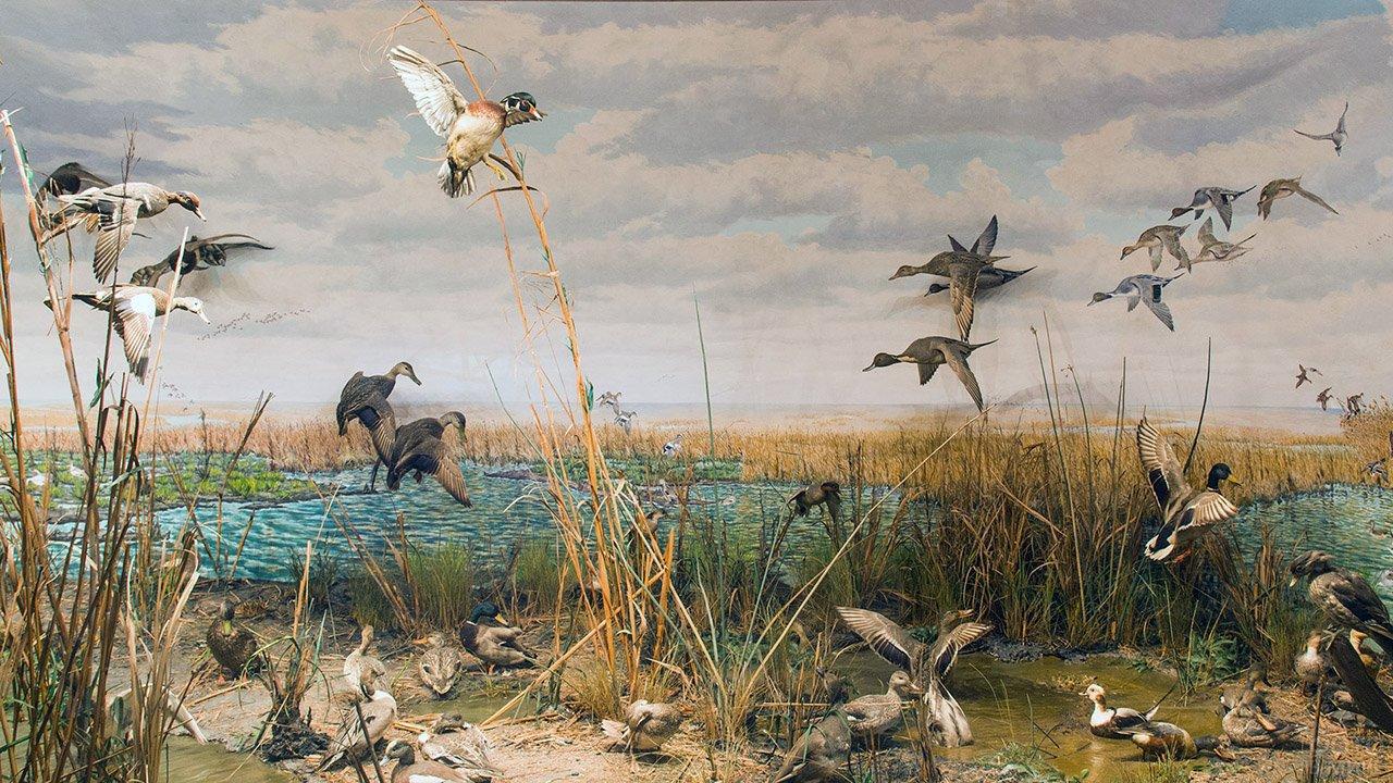 Анималистичная картинка Охота на уток