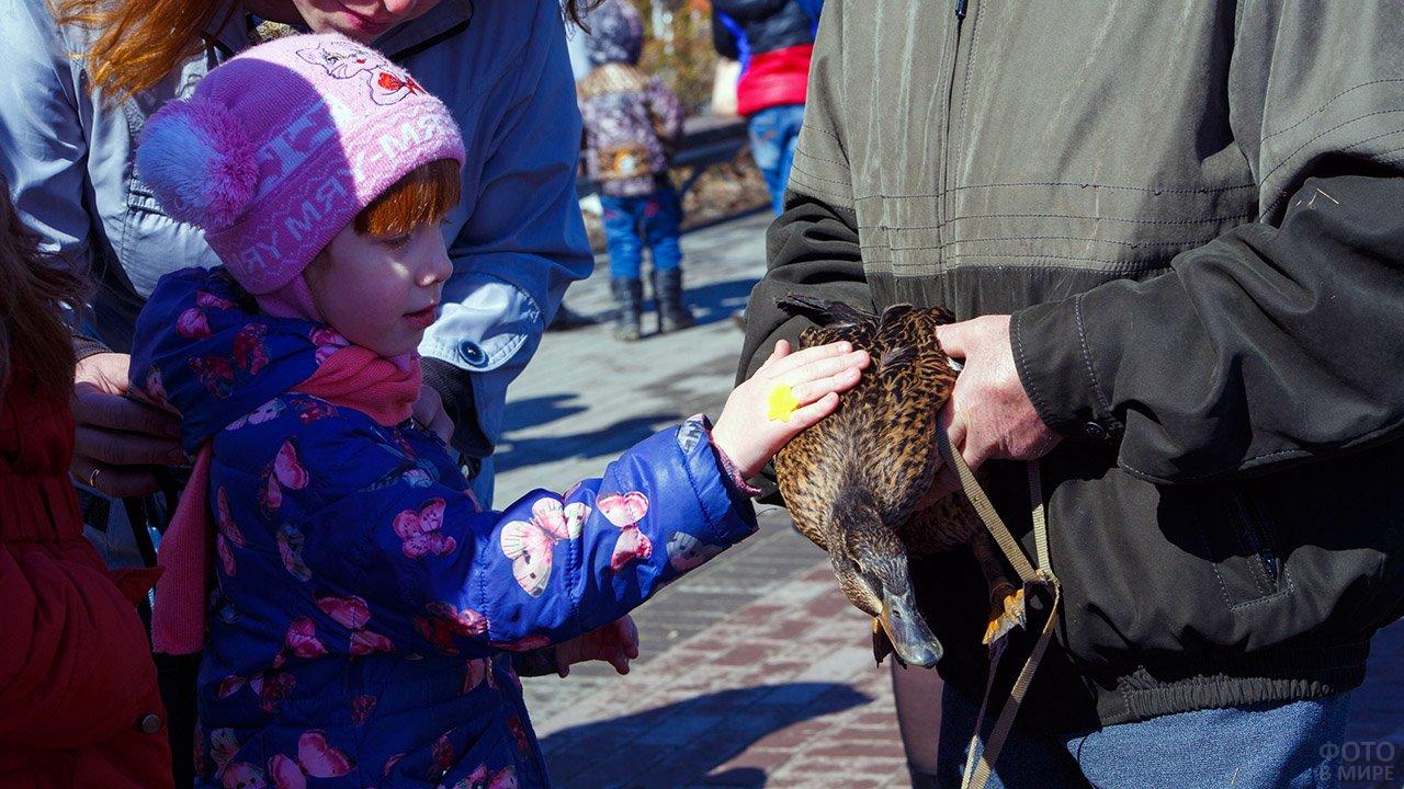 Девочка гладит дикую утку на фестивале Зов весенней охоты в Томске