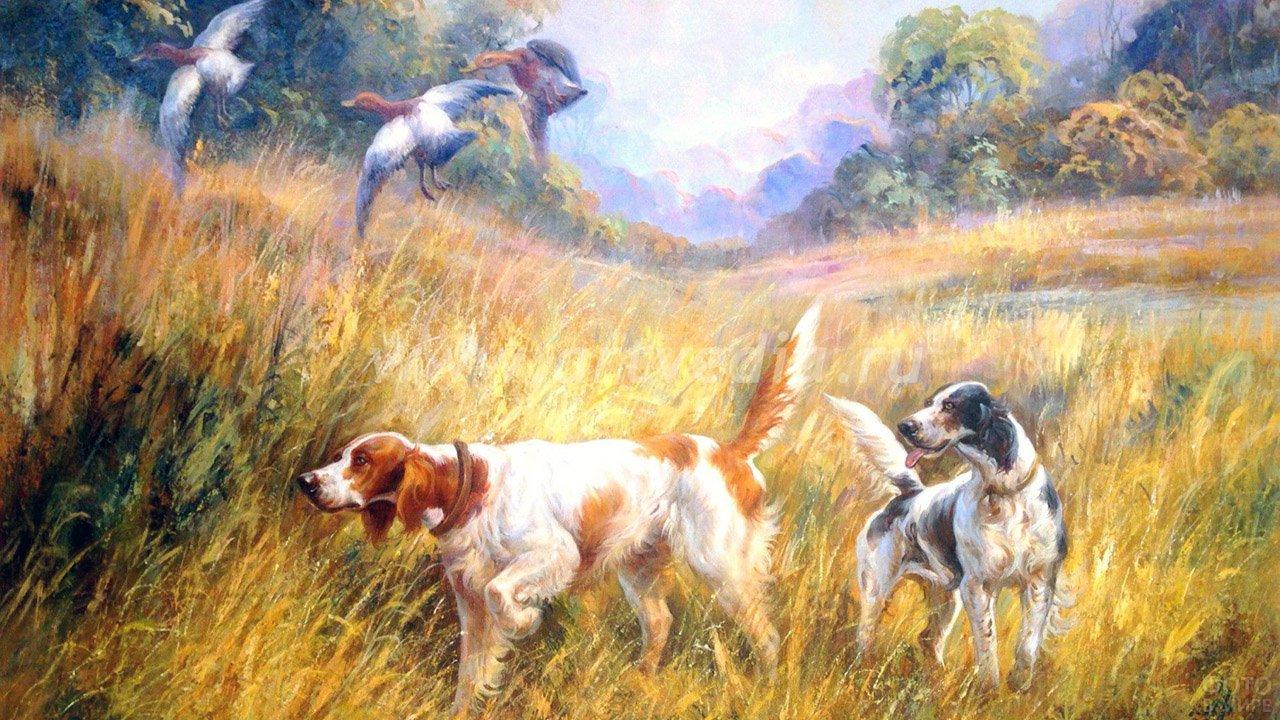 Охотничьи собаки и летящие над жёлтым полем утки на картине маслом