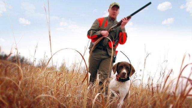Охотничья собака и мужчина с ружьём на утиной охоте в осеннем поле