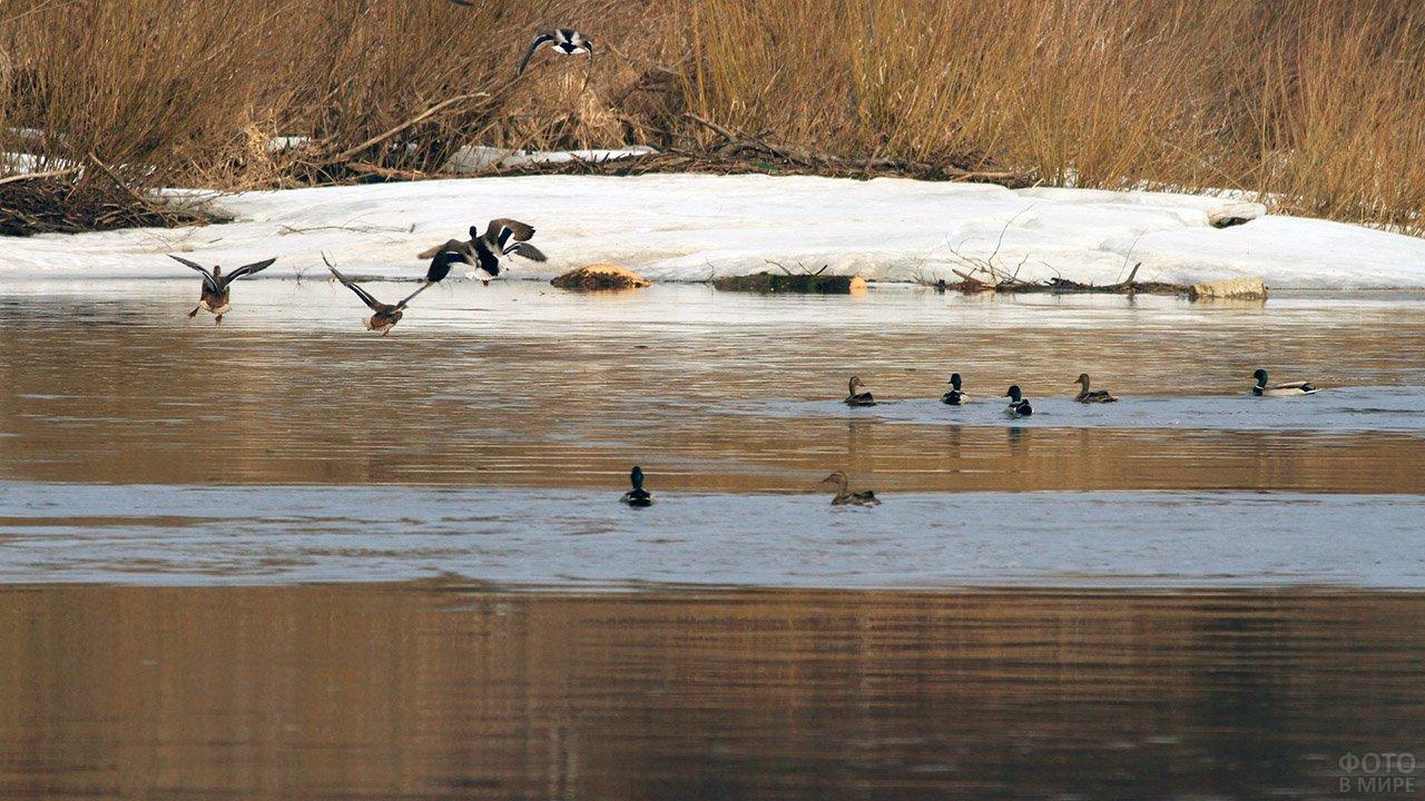 Осенняя охота на селезней и уток на пролёте в охотничьем хозяйстве