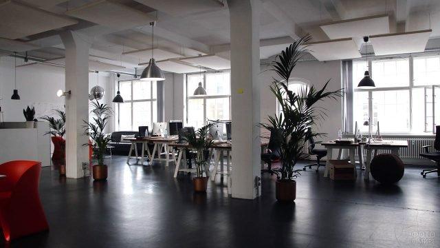 Современный интерьер офиса опен-спейс с пальмами в кадках
