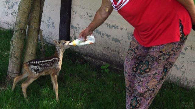 Работница парка Тайган кормит из бутылочки маленькую косулю Лялю