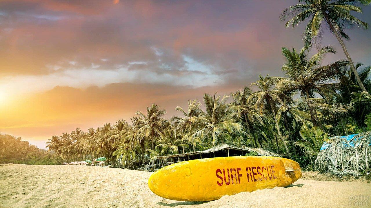 Доска для сёрфа на фоне закатного неба над пальмами на пляже Гоа