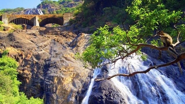 Обезьянка на ветке над водопадом Дудхсагар
