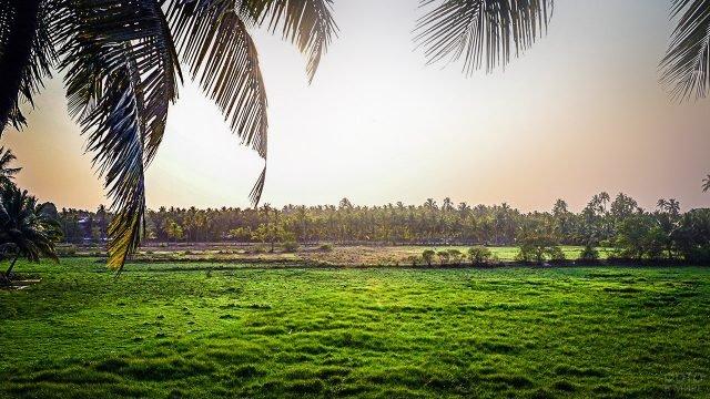 Зелёный пейзаж с полями и пальмами на Гоа
