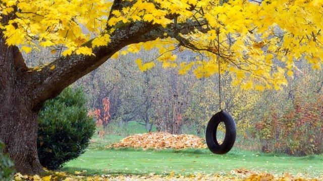 Качели из покрышки на ветке осеннего клёна