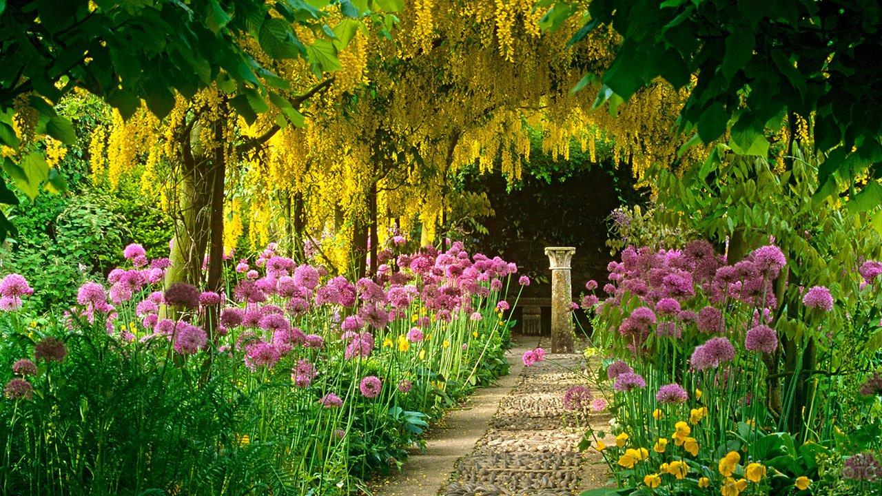 Декоративный цветущий лук вдоль аллеи акаций в саду с греческой колонной