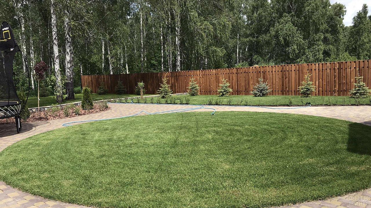 Геометрично-круглый газон в саду с берёзами