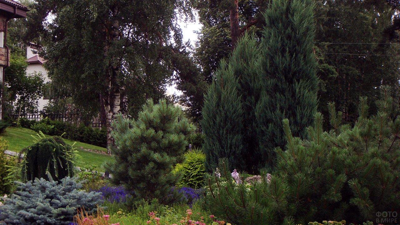 Искусно вписанный в естественный сад ландшафтный дизайн с хвойными деревьями на цветочной клумбе