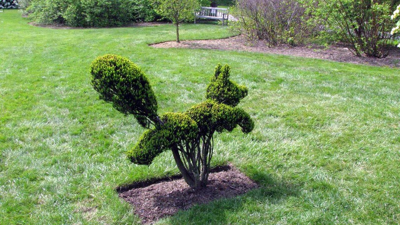 Топиарий Белка на садовой лужайке