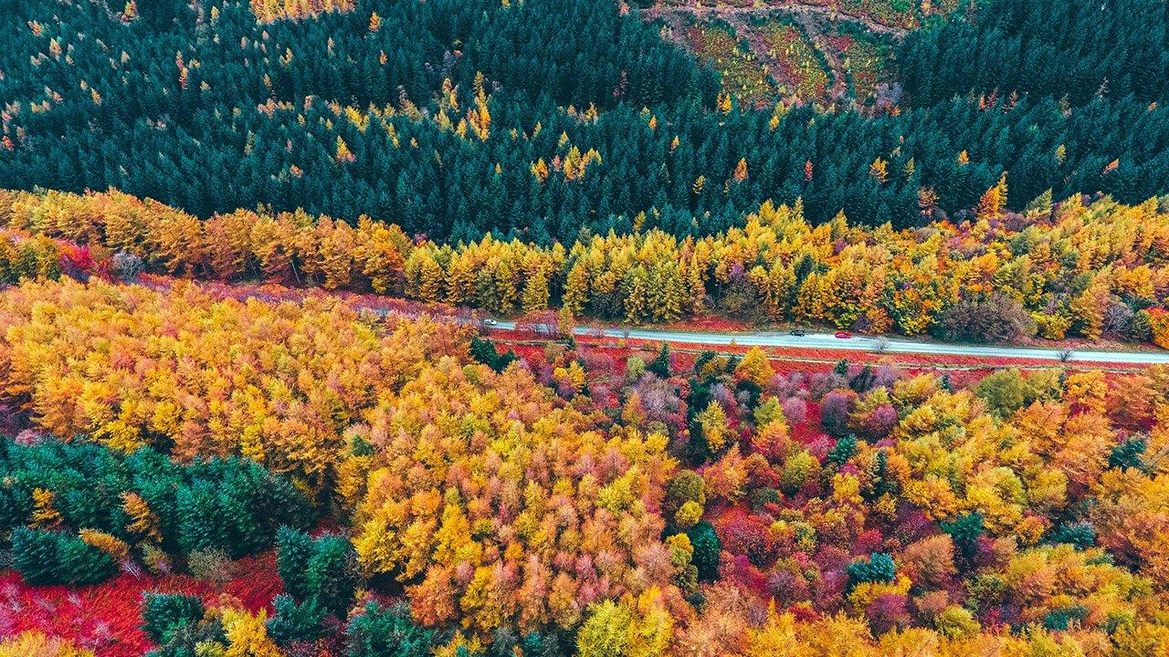 Аэрофотосъёмка пёстрого осеннего леса вдоль горной трассы