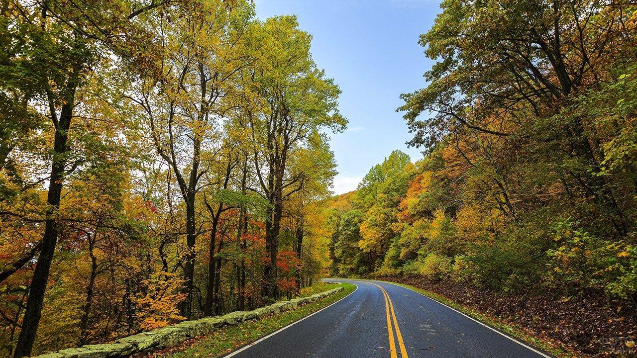 Дорога через лес ранней осенью