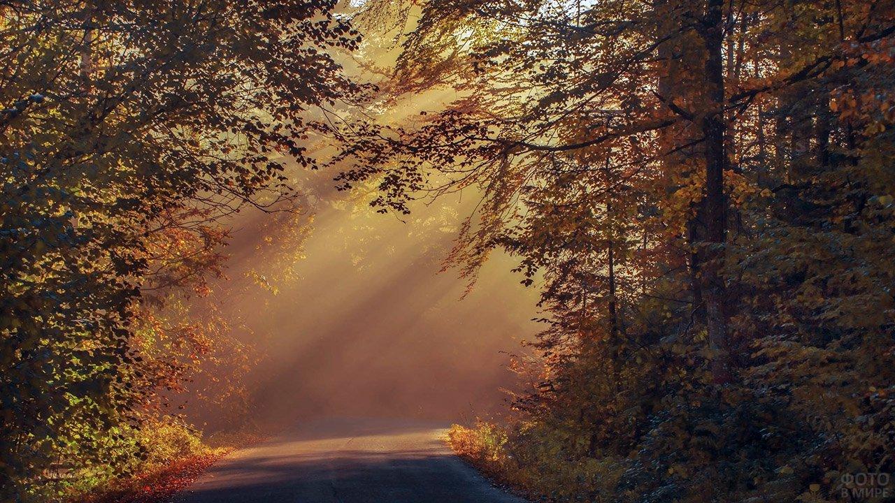 Косые лучи солнца падают на лесную дорогу сквозь густую осеннюю листву