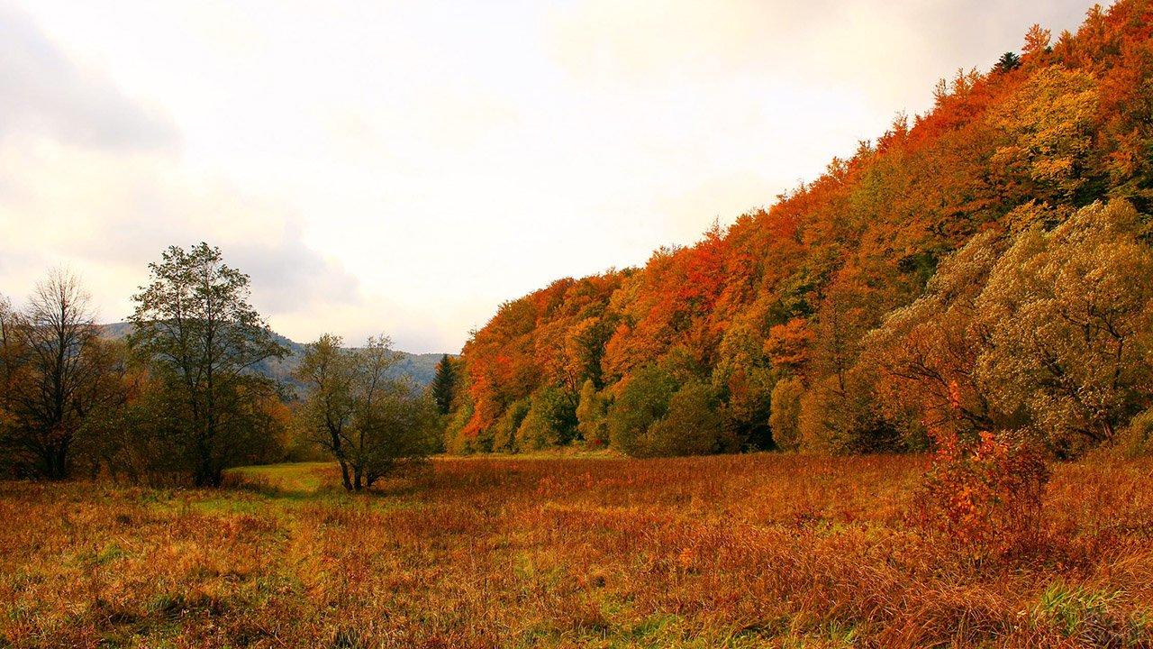 Лесистый склон холма в жёлто-красной листве
