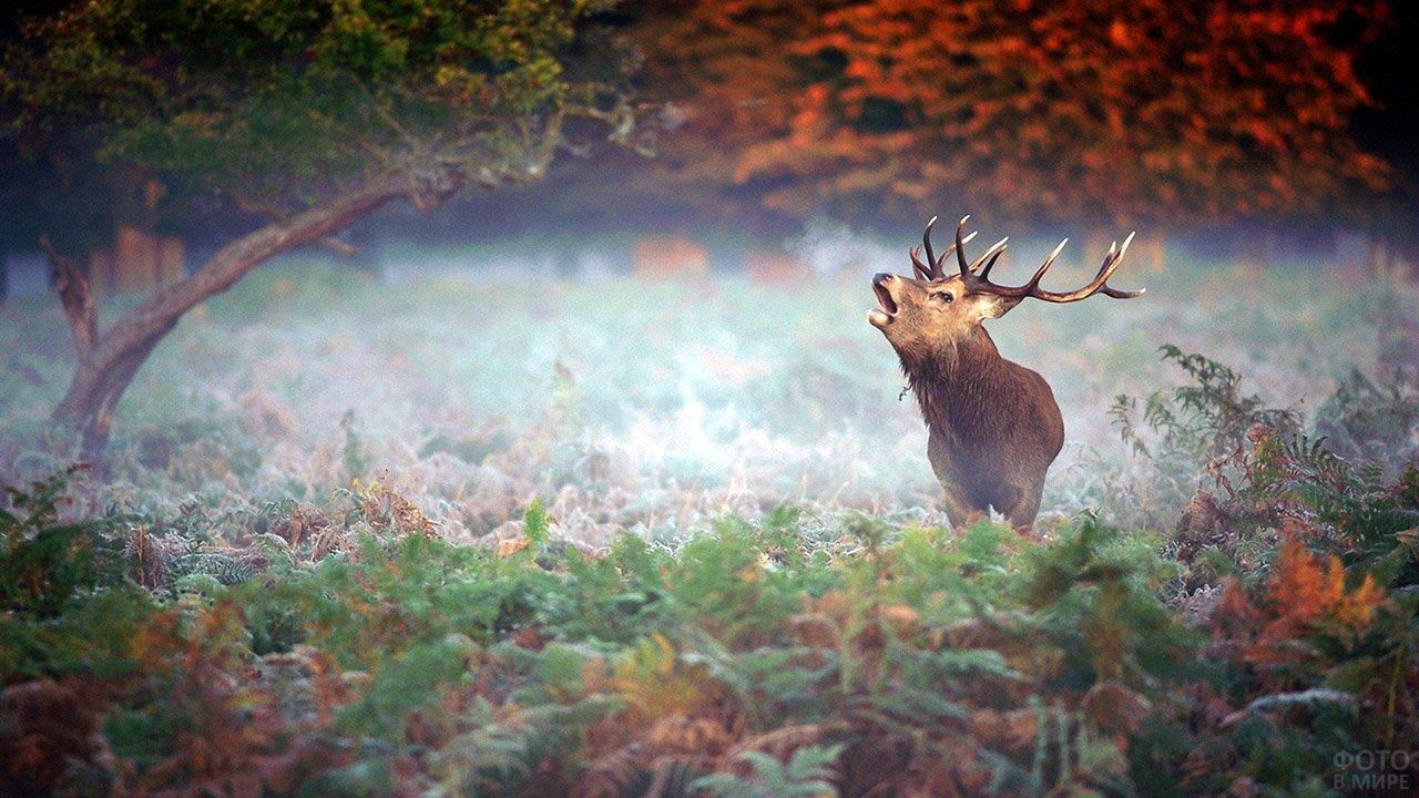 Лось морозным утром в осеннем лесу