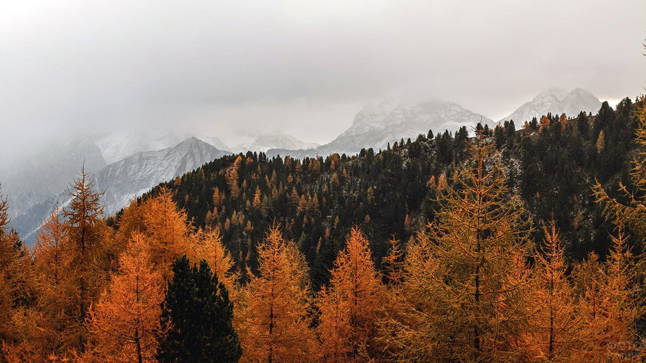 Осенний лес на вершине горы
