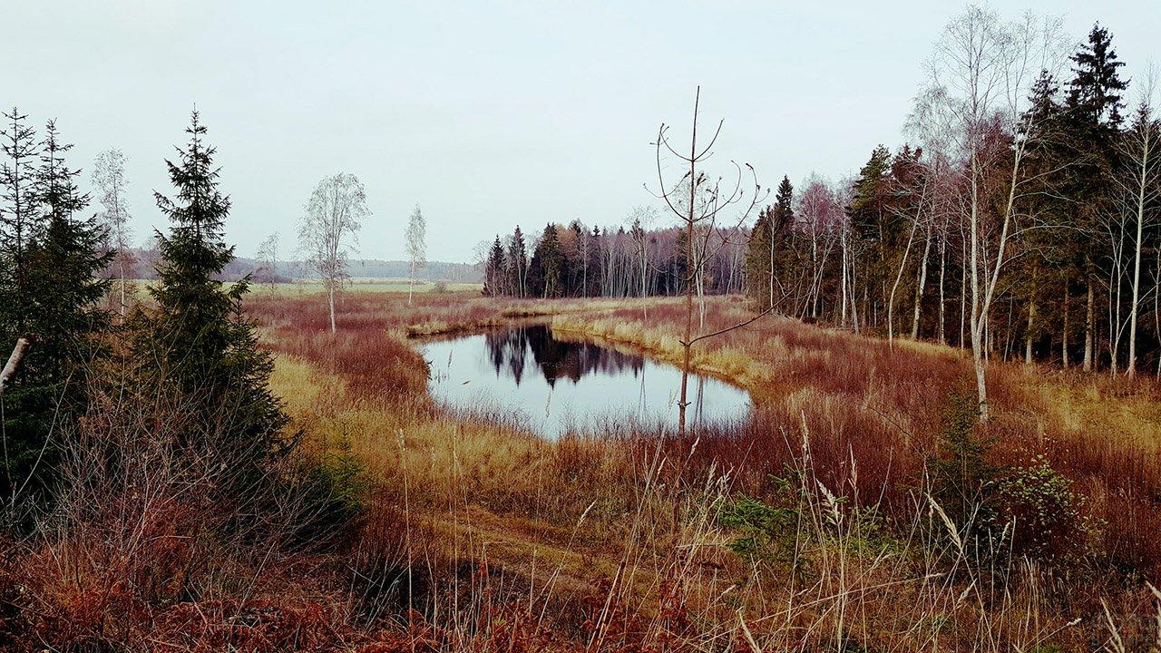 Озерцо на опушке осеннего леса