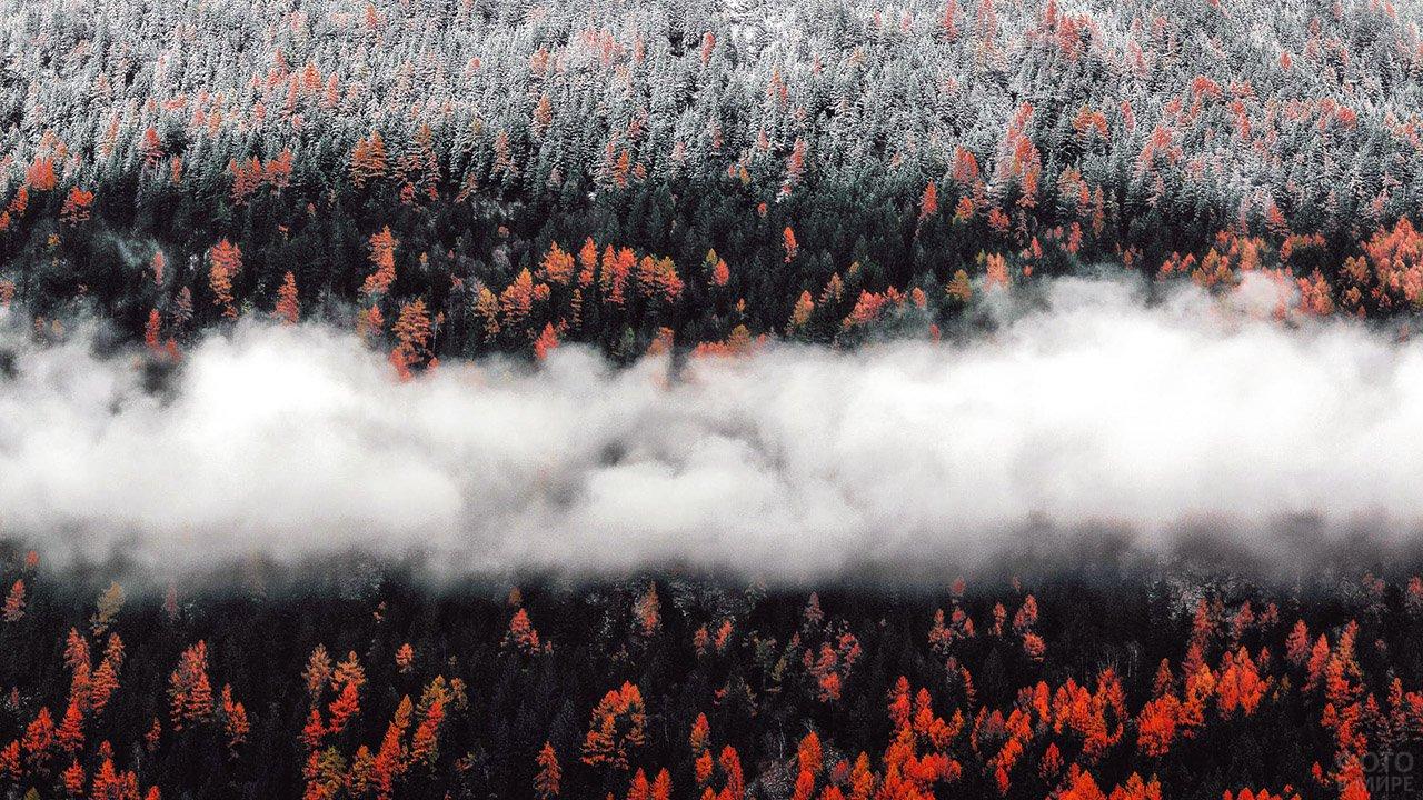 Полоса тумана над осенней тайгой